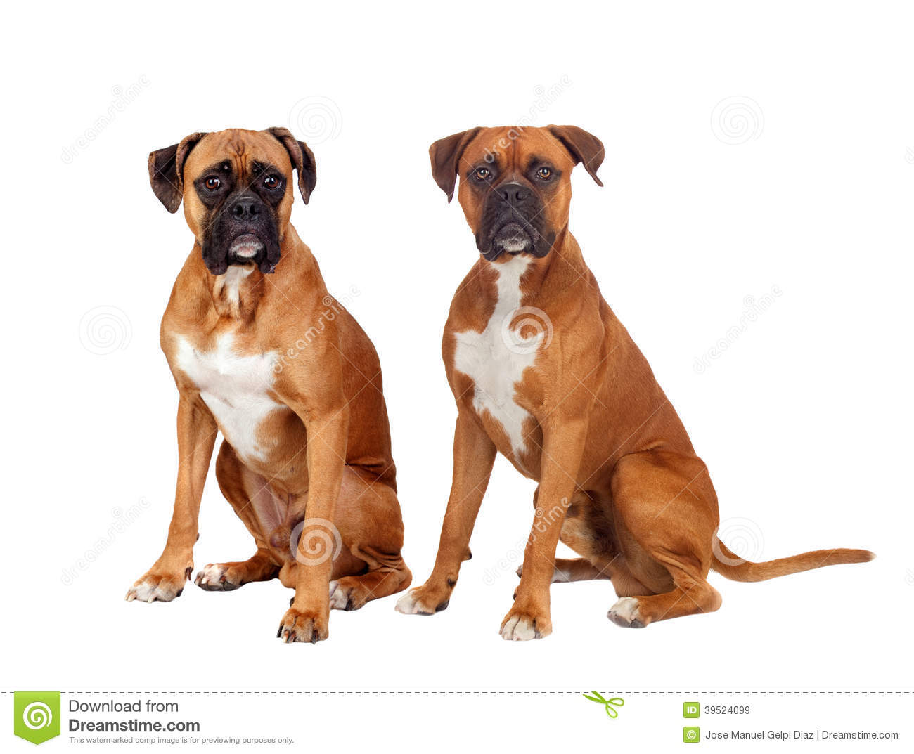 Dog Names For Two Dogs