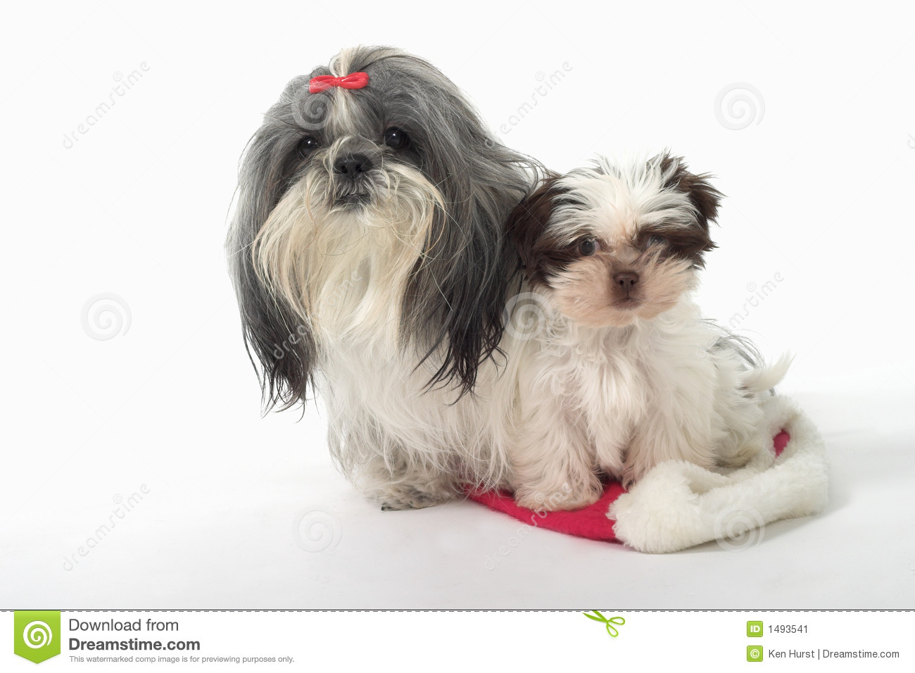 Two Dogs Sitting On A Santa Hat