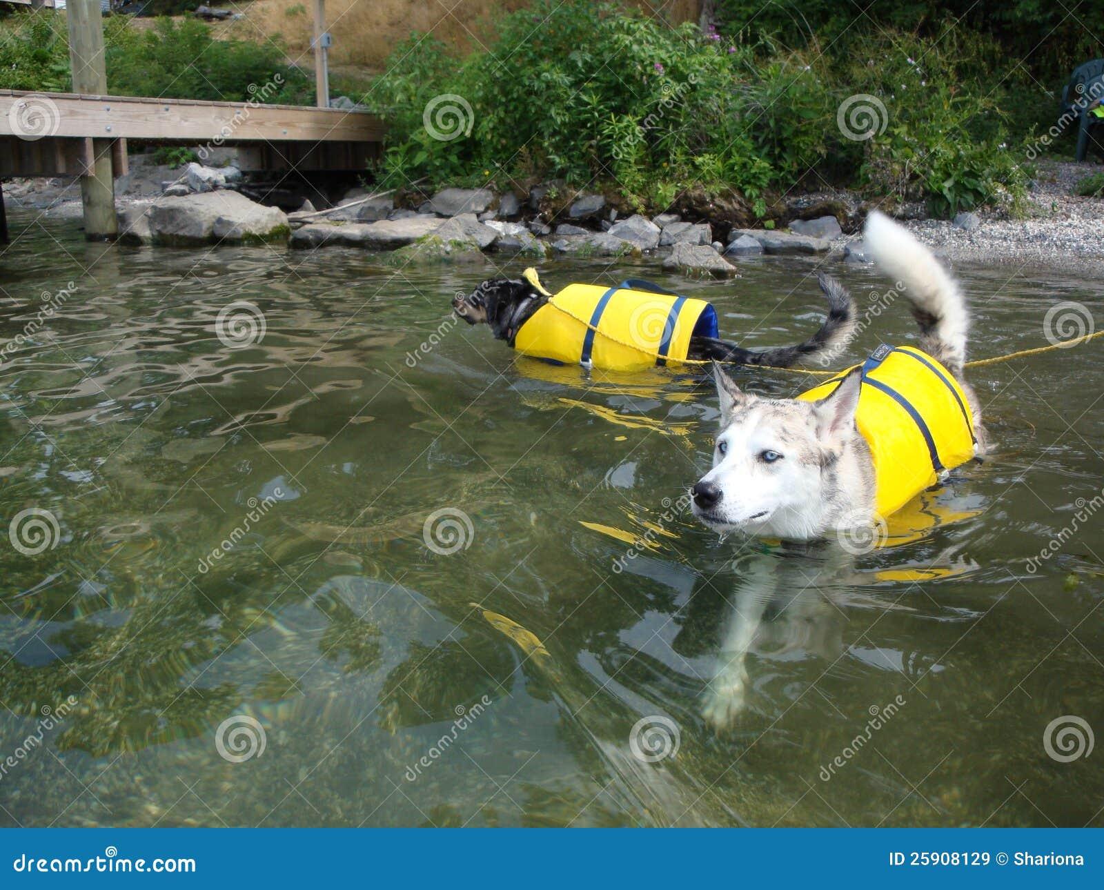 Ausky dog and Catahoula