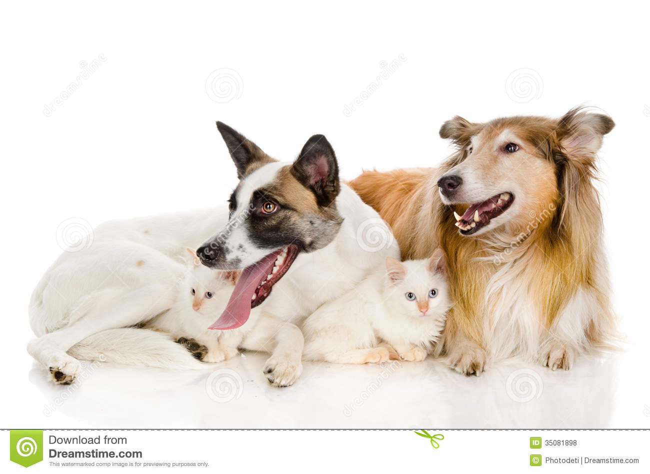 Two Dogs And Tiny Kittens Royalty Free Stock Photos