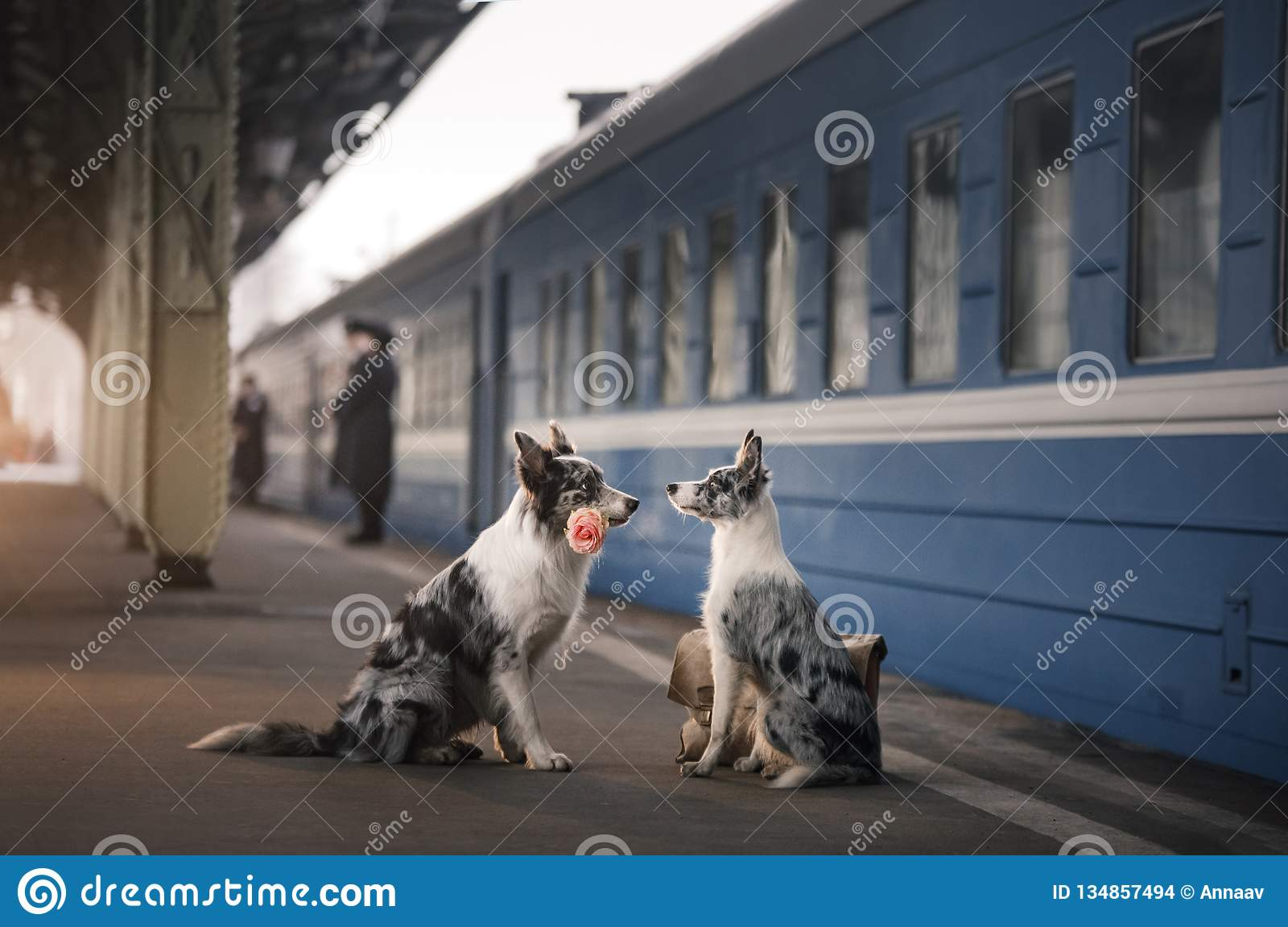 Two dogs together. Meeting at the station. Travelling