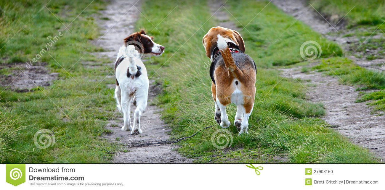 How to Walk Two Dogs at the Same Time on Leashes forecasting