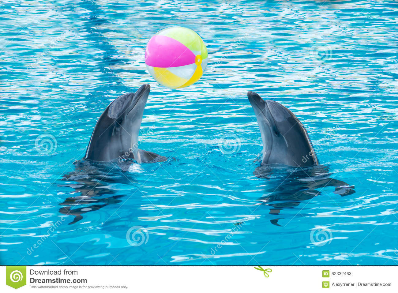 images of dolphins playing - photo #21