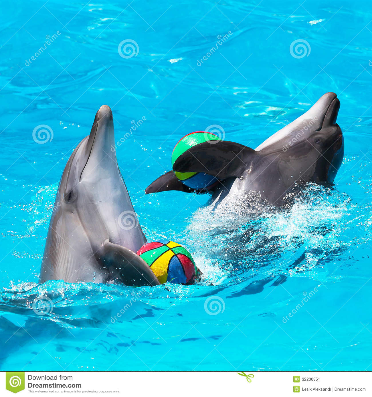 Marine aquaculture and bottlenose dolphins  Tursiops