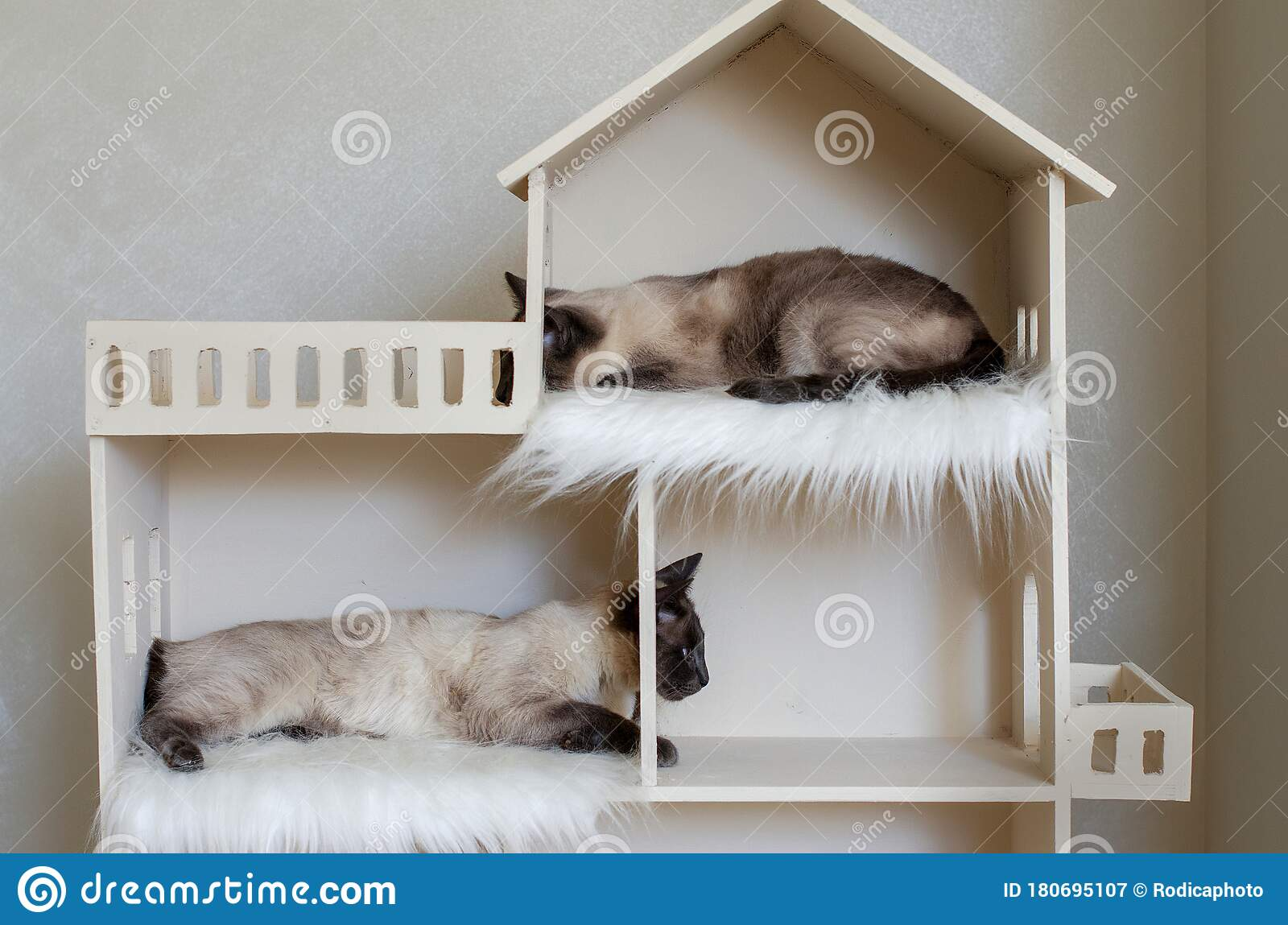 Two Domestic Short Haired Cat Brothers In Cat House Domestic Cat Twins Stock Image Image Of Curious Fussy 180695107