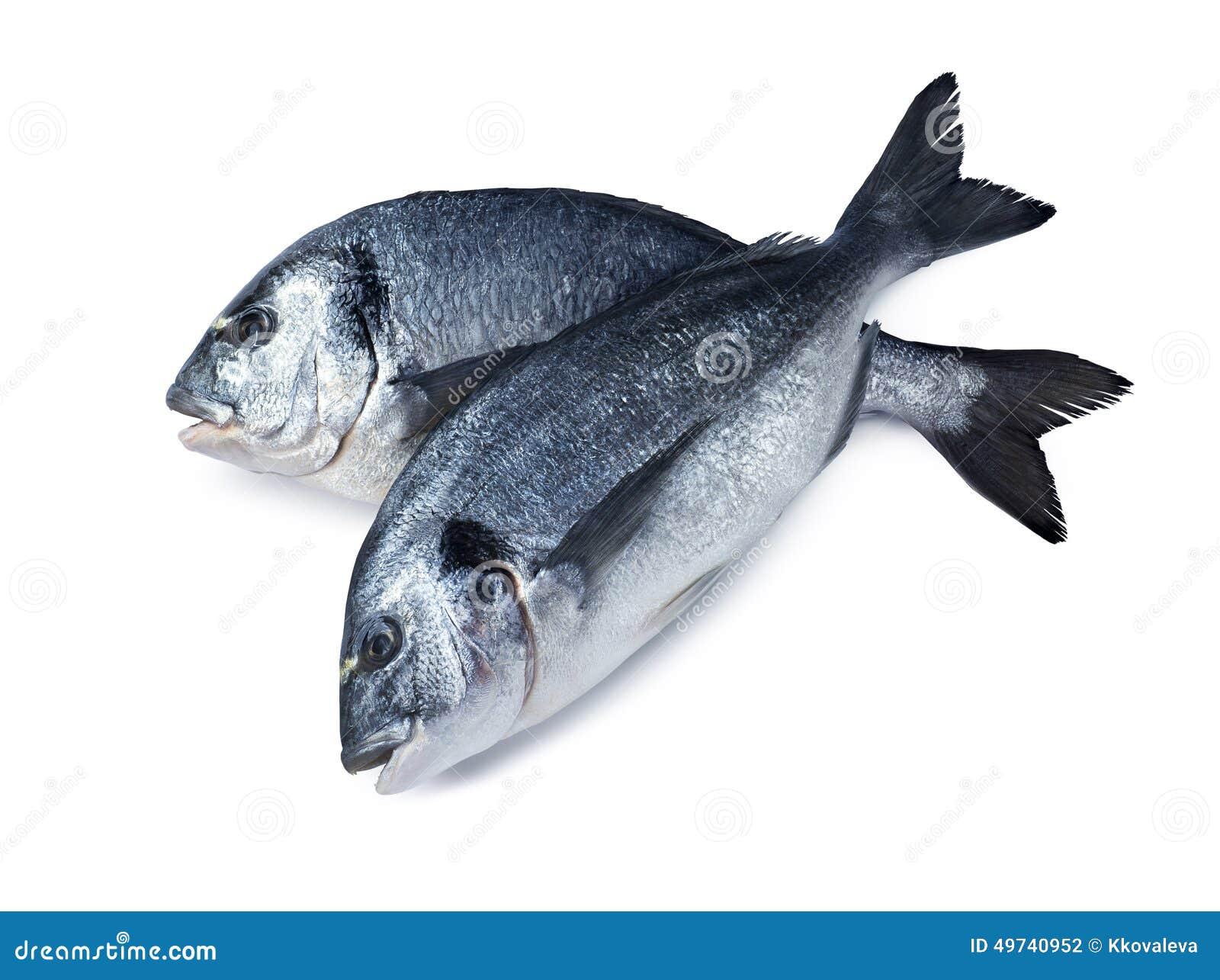 Two dorado fish crossed isolated on white background