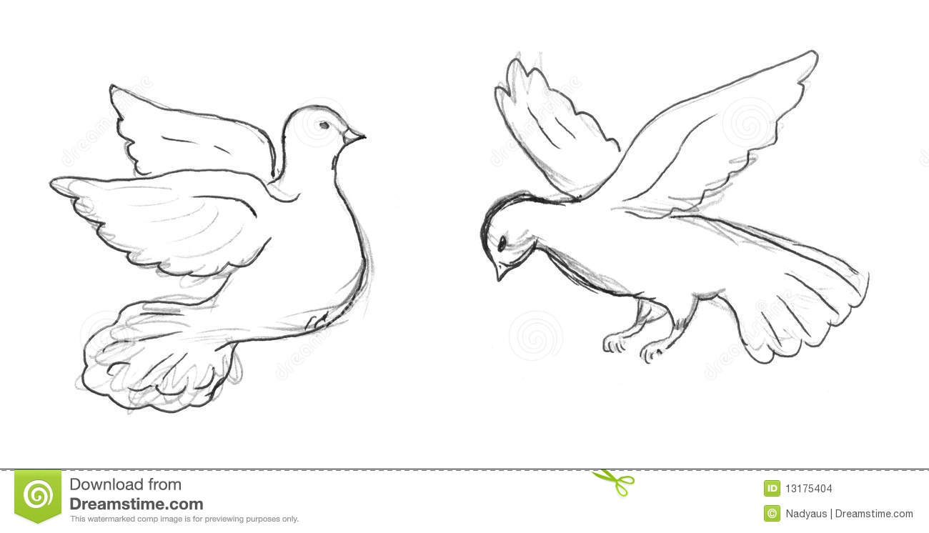 Two Dove Sketch Stock Images Image 13175404