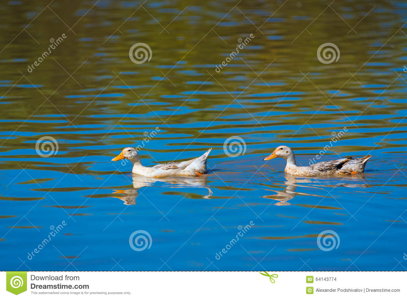 Water Move Royalty Free Stock Photos - Image: 4645058