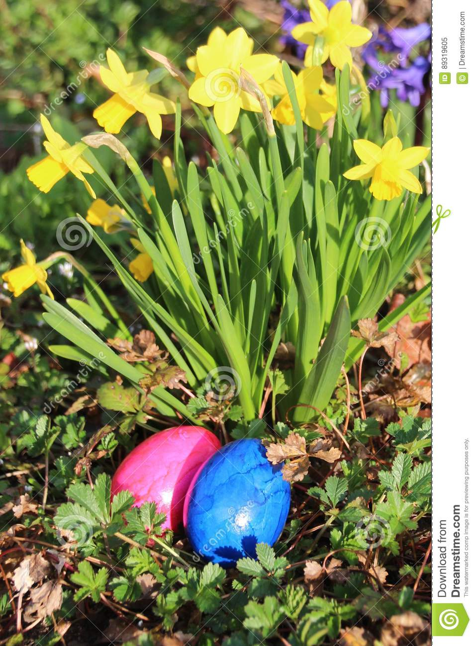 Two easter-eggs in front of a yellow daffodil