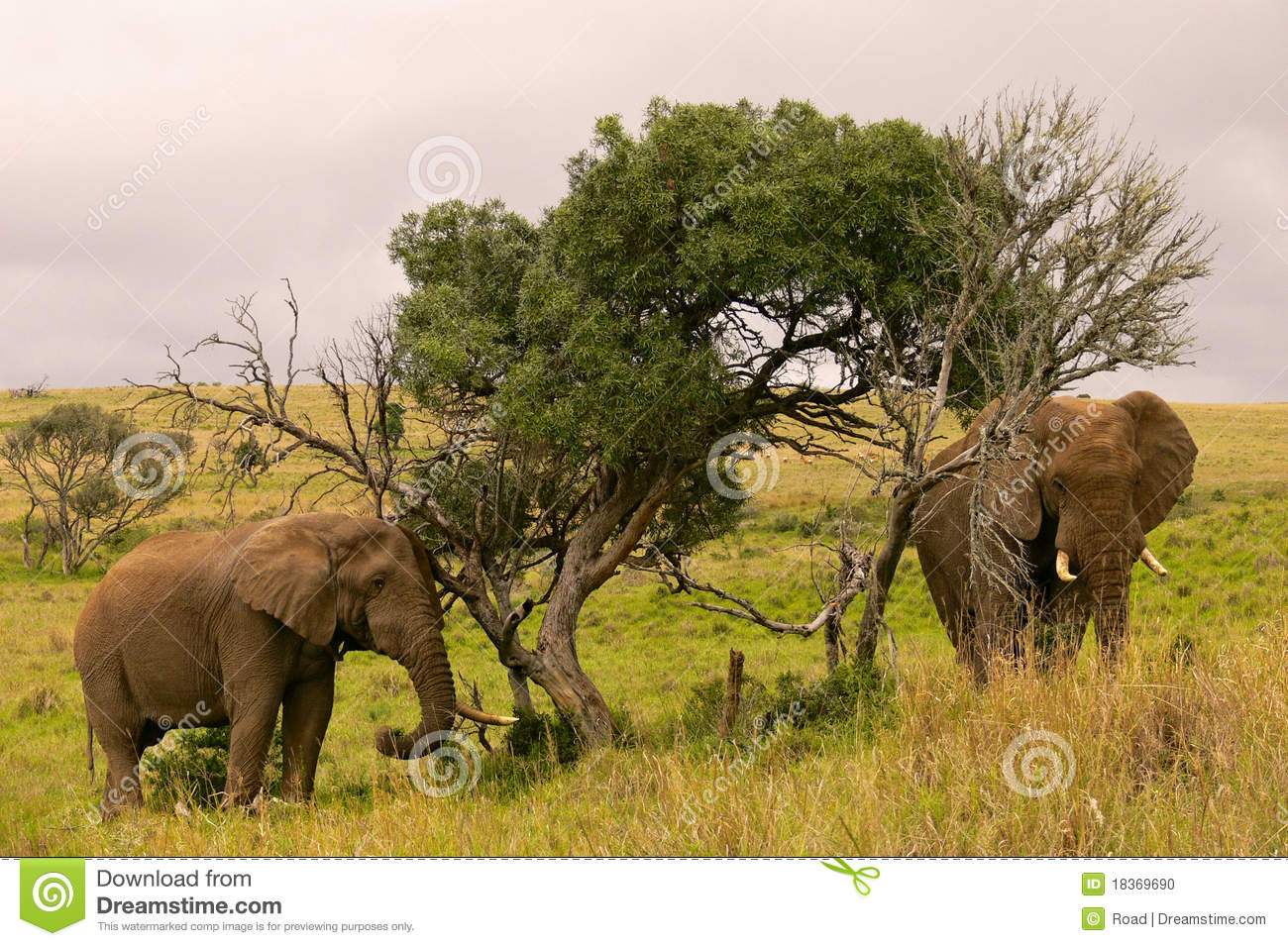 Two Elephants In A South African Landscape Stock Photo