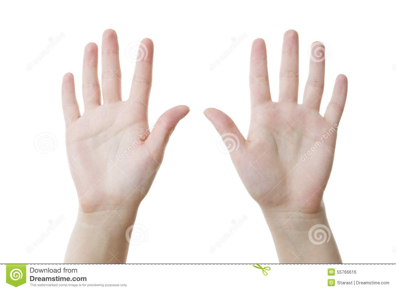 Two female hands, palms up stock photo. Image of person ...