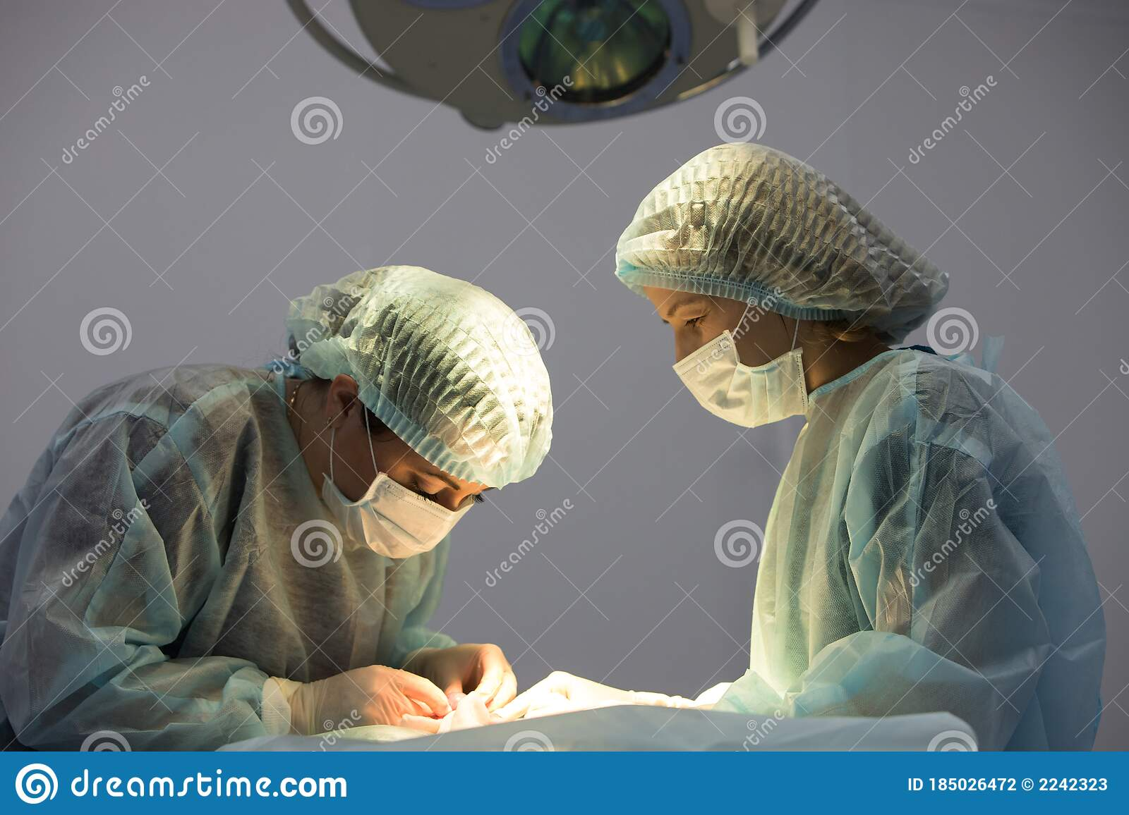 Two Female Veterinarian Does Cat Sterilization Surgery And