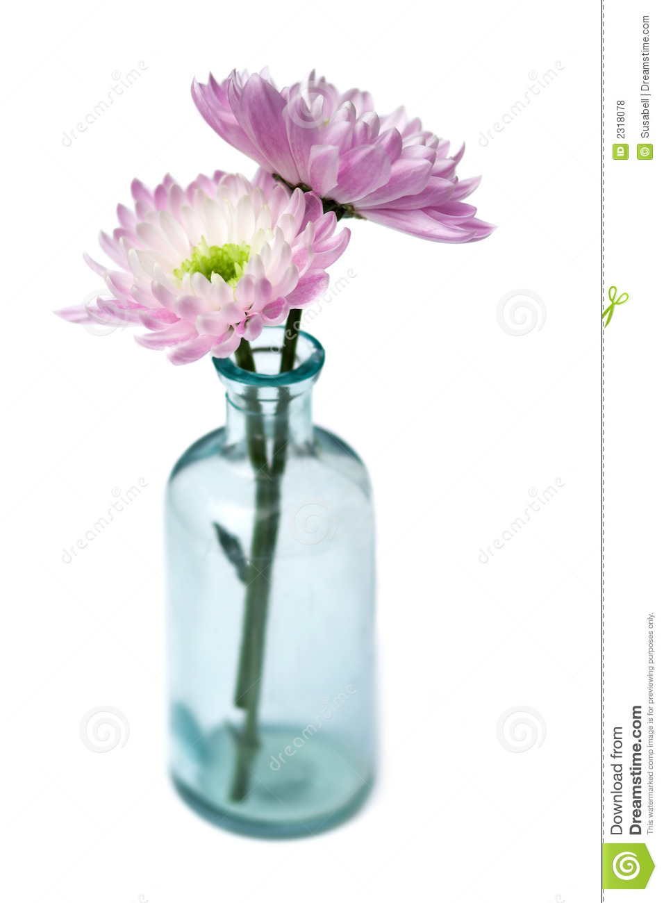 262 & Two Flowers in Glass Vase stock photo. Image of floral - 2318078