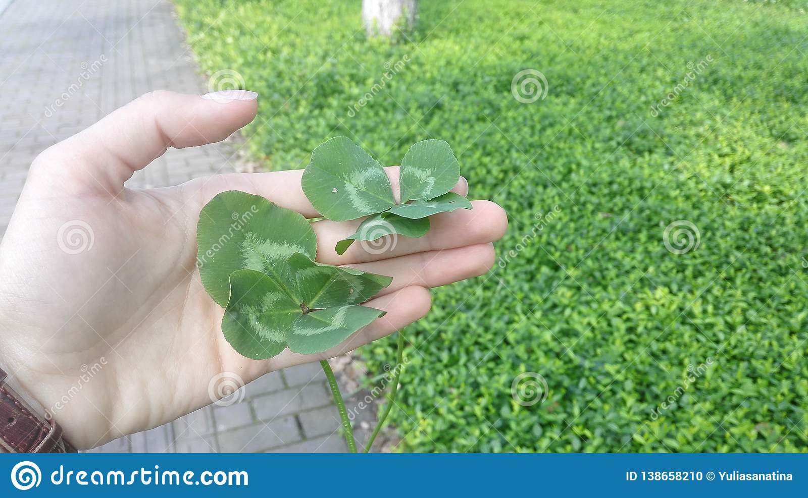Two four leafed lucky clovers