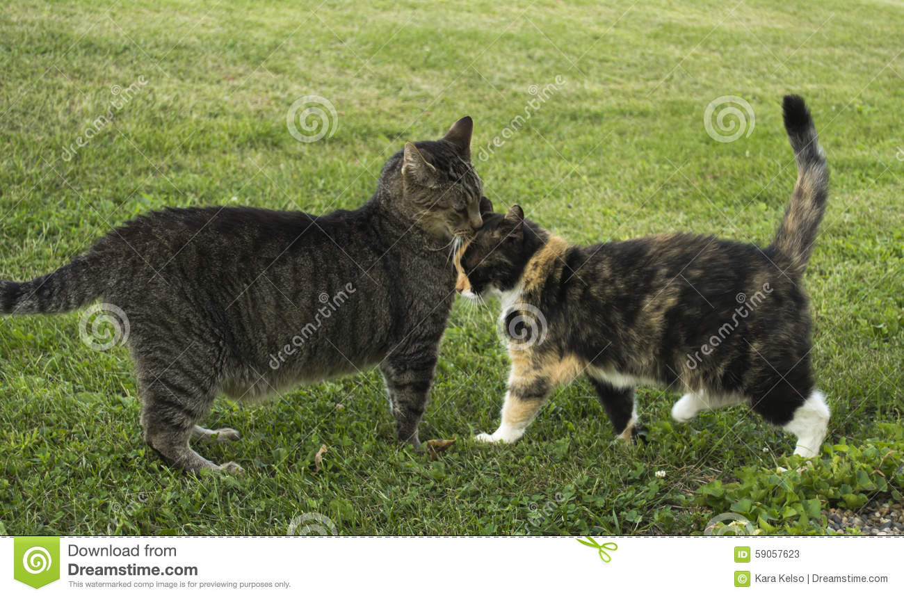 Two Friendly Cats Nuzzling stock image. Image of kitties