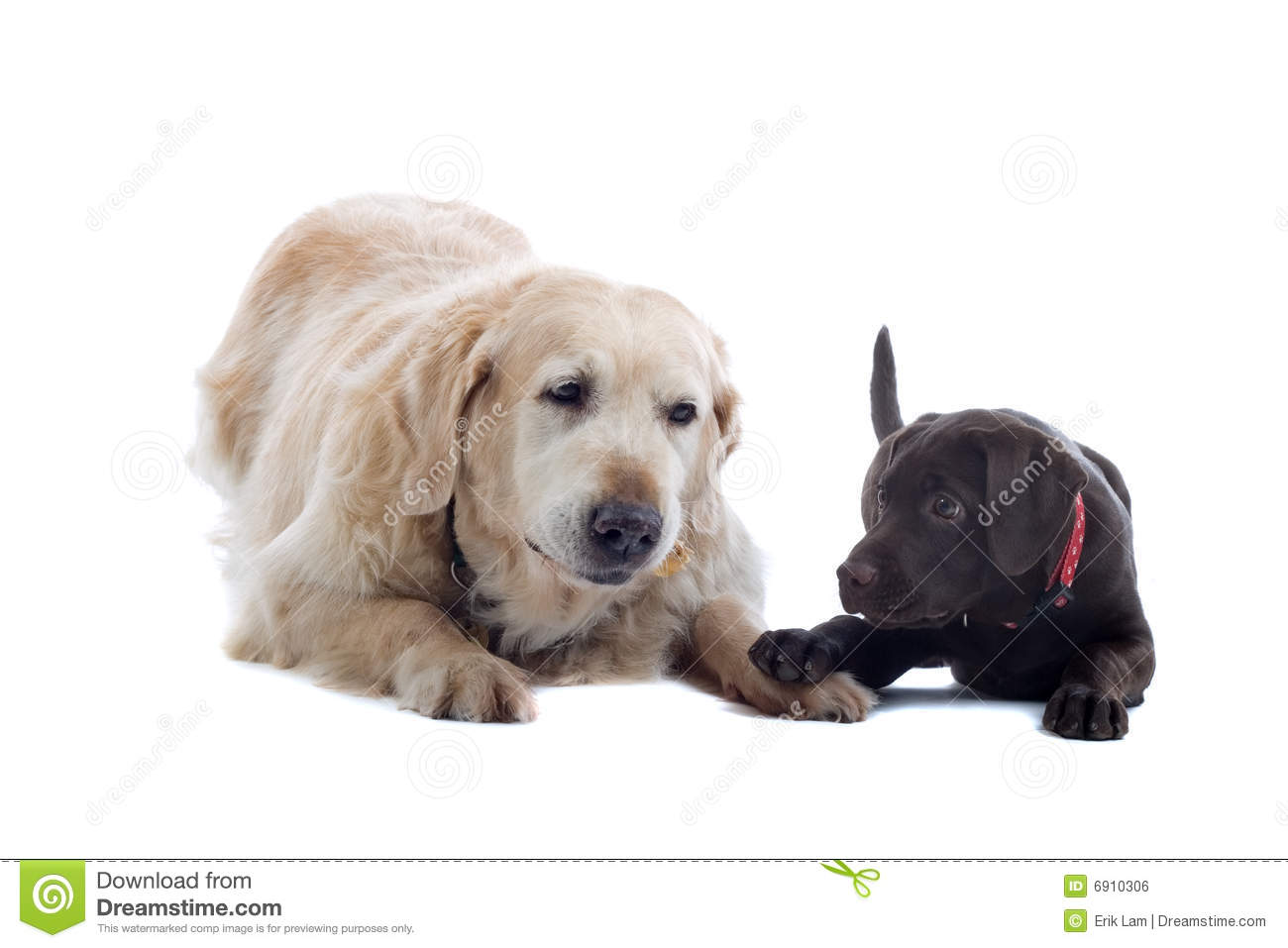 Two friendly dogs