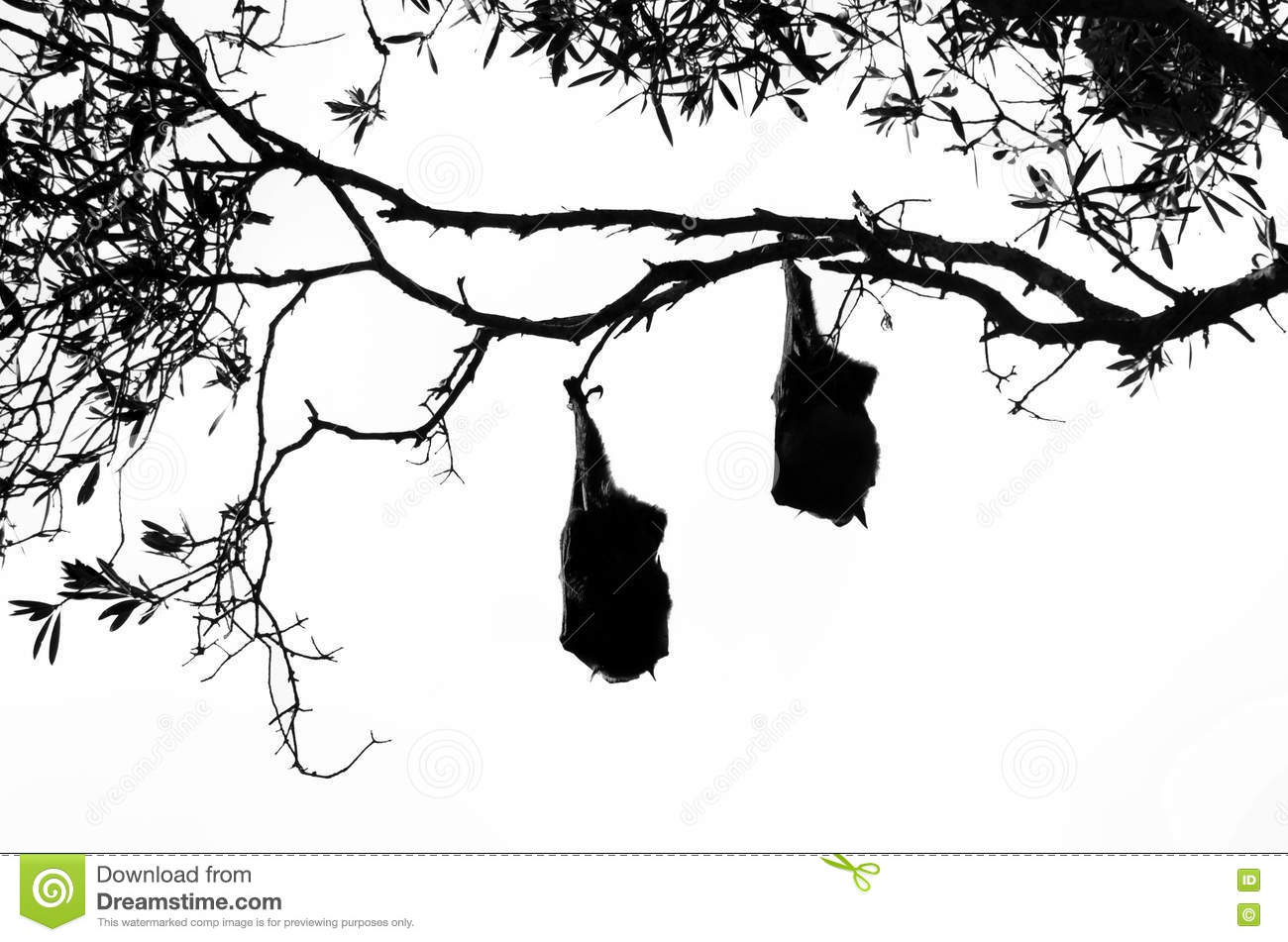 Two fruit bats hanging from a tree in silhouette