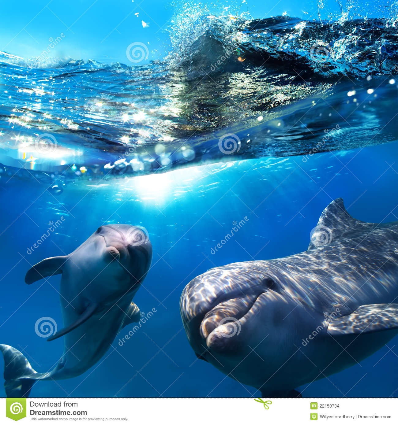 Two funny dolphins smiling underwater