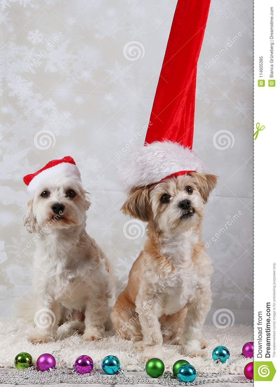 two funny christmas dogs portrait
