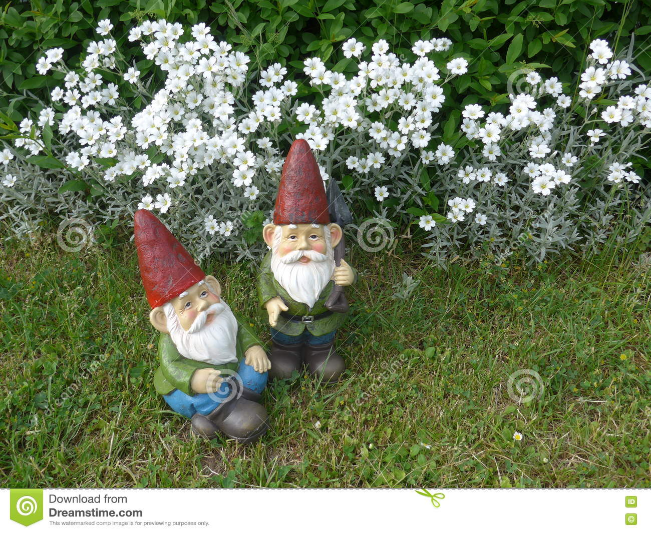 download two funny garden gnomes with red hats stock photo image of agriculture beard - Funny Garden Gnomes