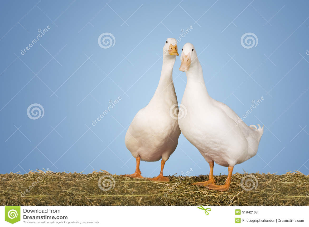 Two Geese Against Blue Sky