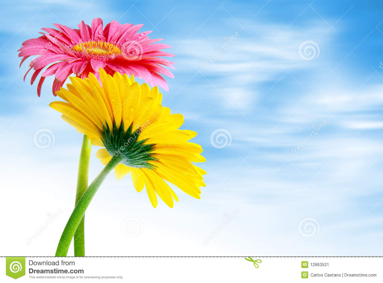 Two colorful gerber flowers against a soft cloudy blue sky