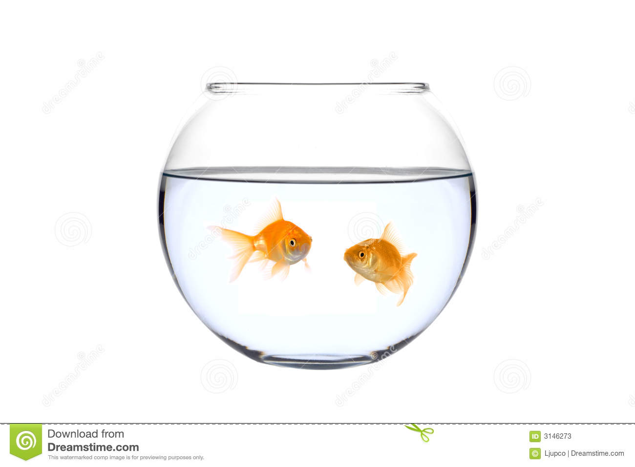 Two golden fish in a bowl stock image image of studio for Fish in a bowl