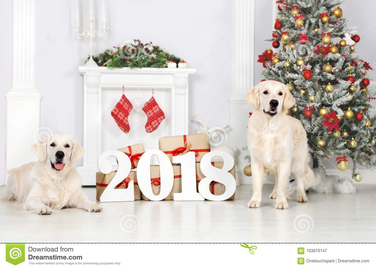 Two Golden Retriever Dogs Posing Indoors For New Year 2018 Stock