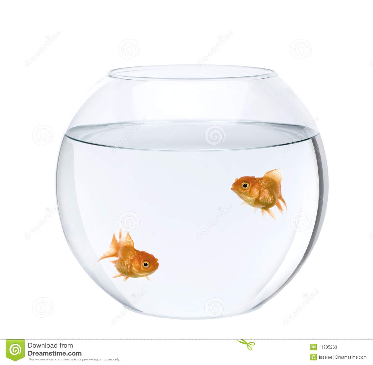 Two goldfish swimming in fish bowl stock photos image for Fish in a bowl