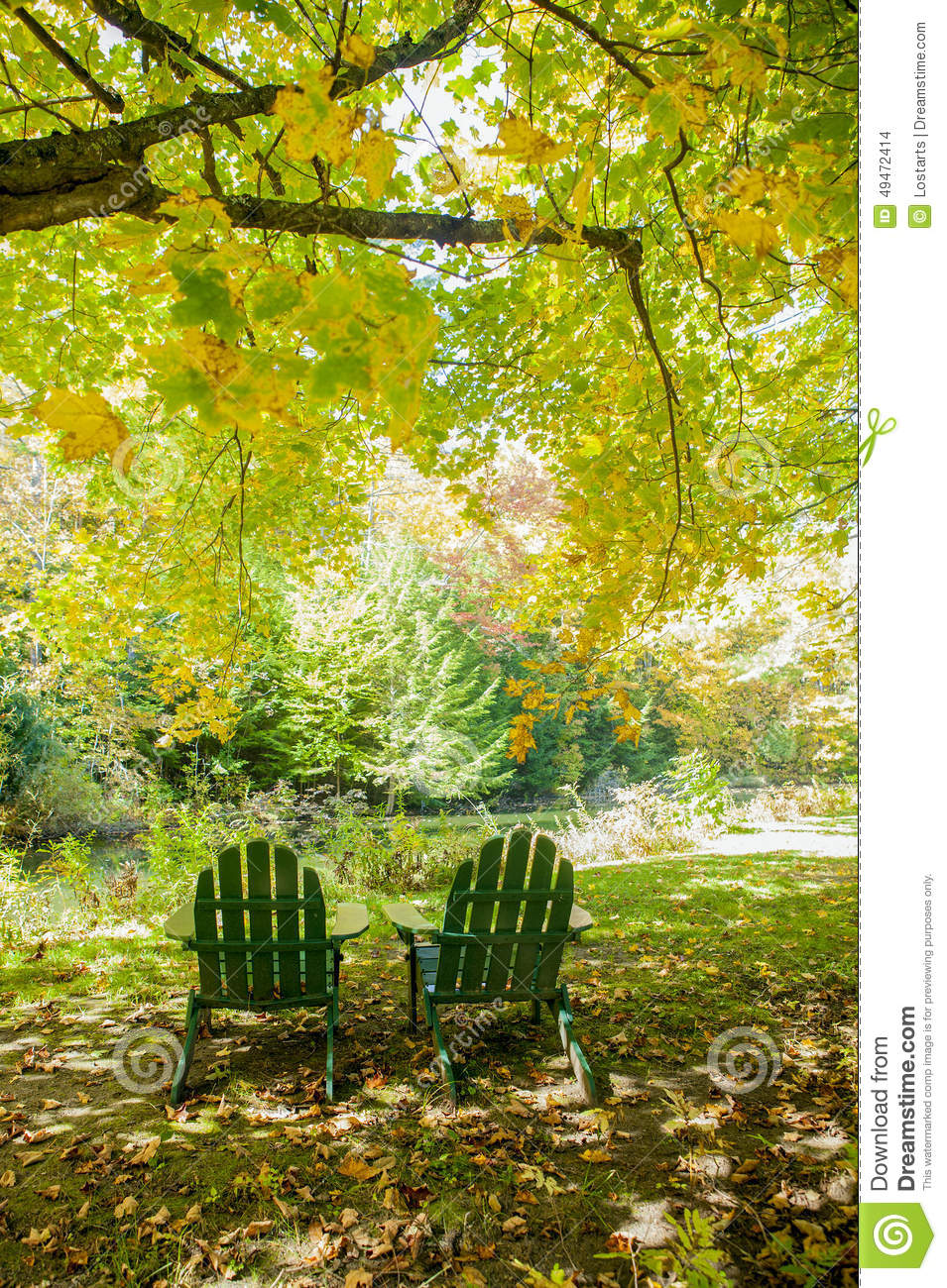 Two Green Adirondack Chairs Under A Maple Tree Stock Photo