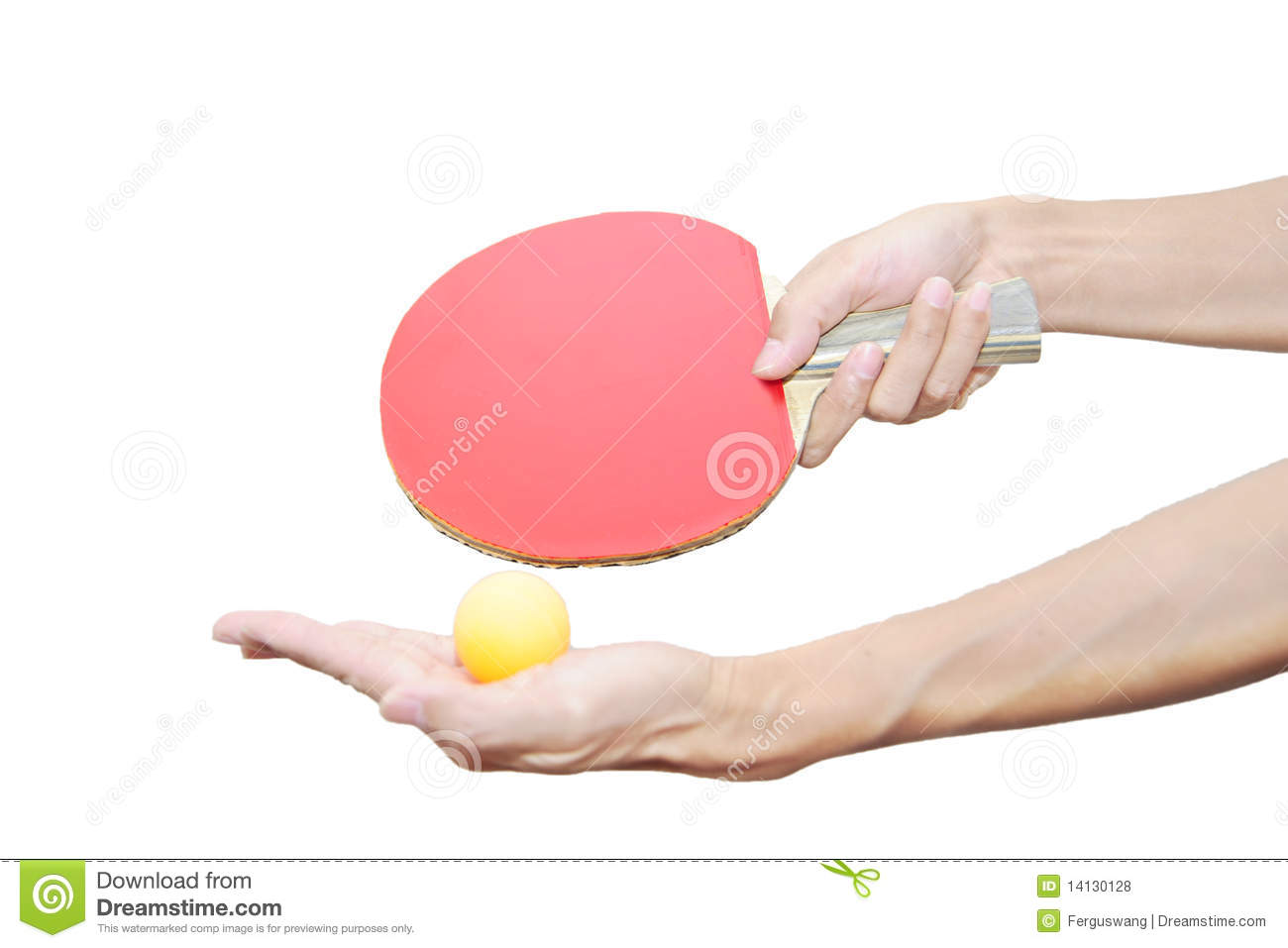 Two Hand Holding Table Tennis Bat And Ball Stock Photo