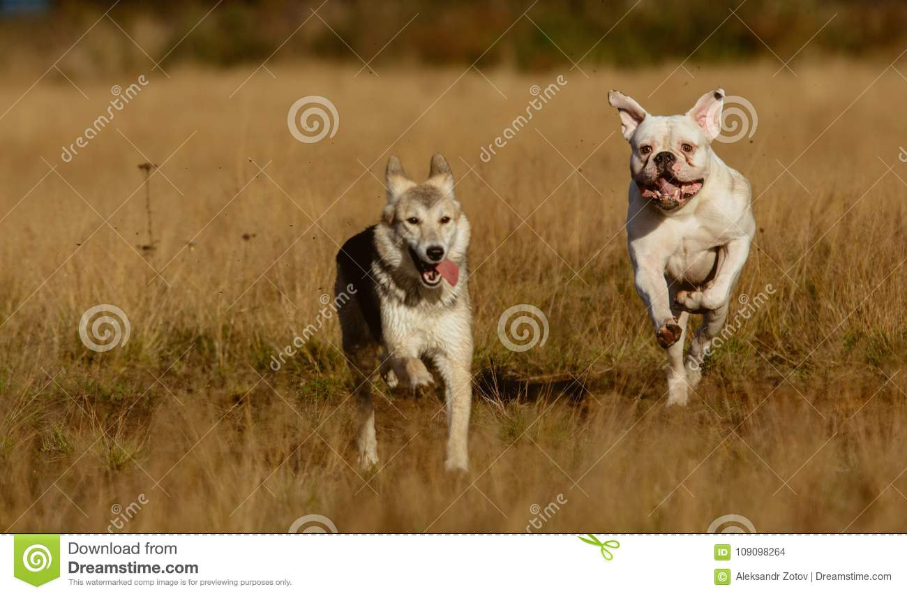 Dogs running on lawn
