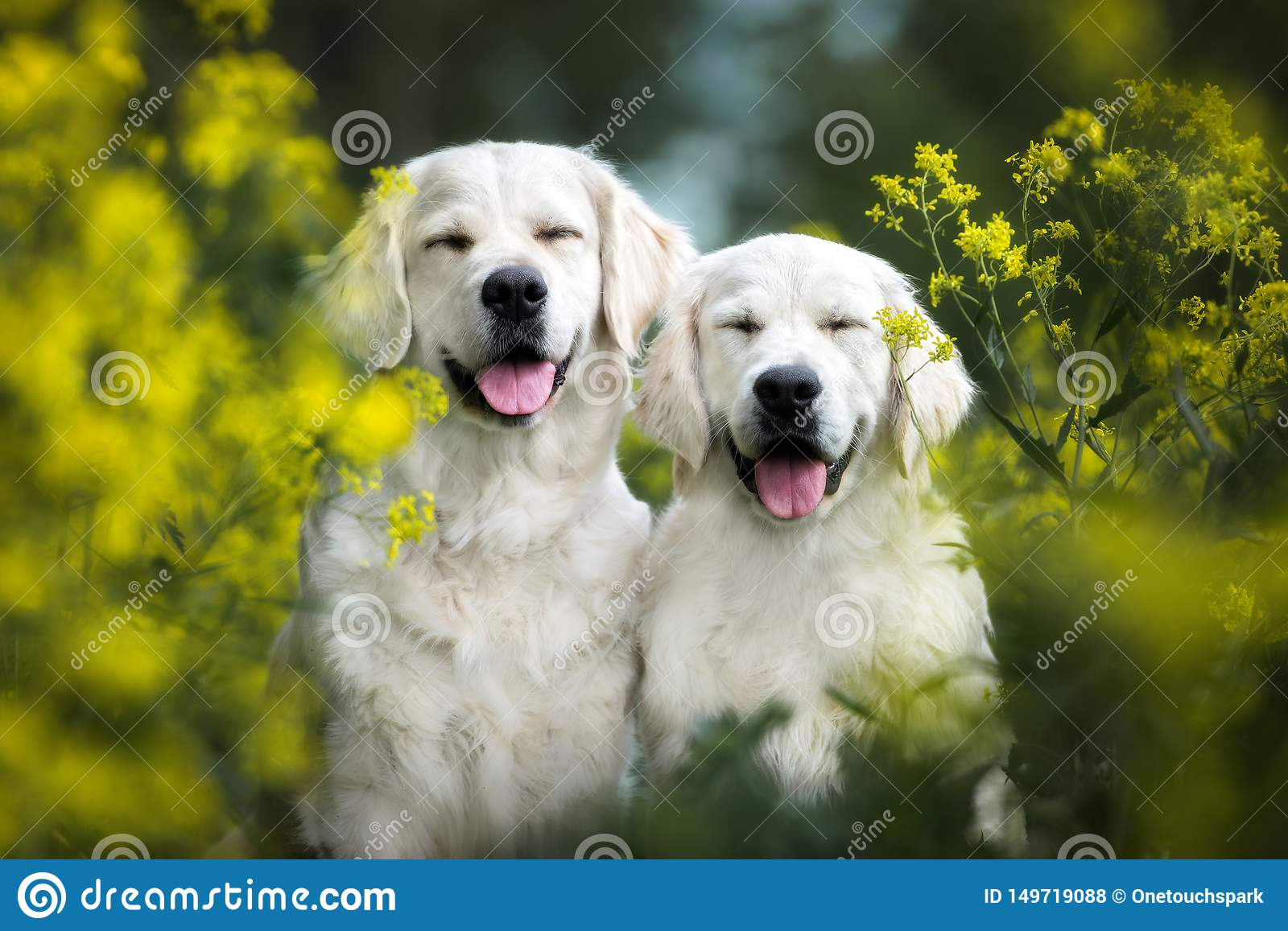 Two happy smiling dogs posing outdoors in summer