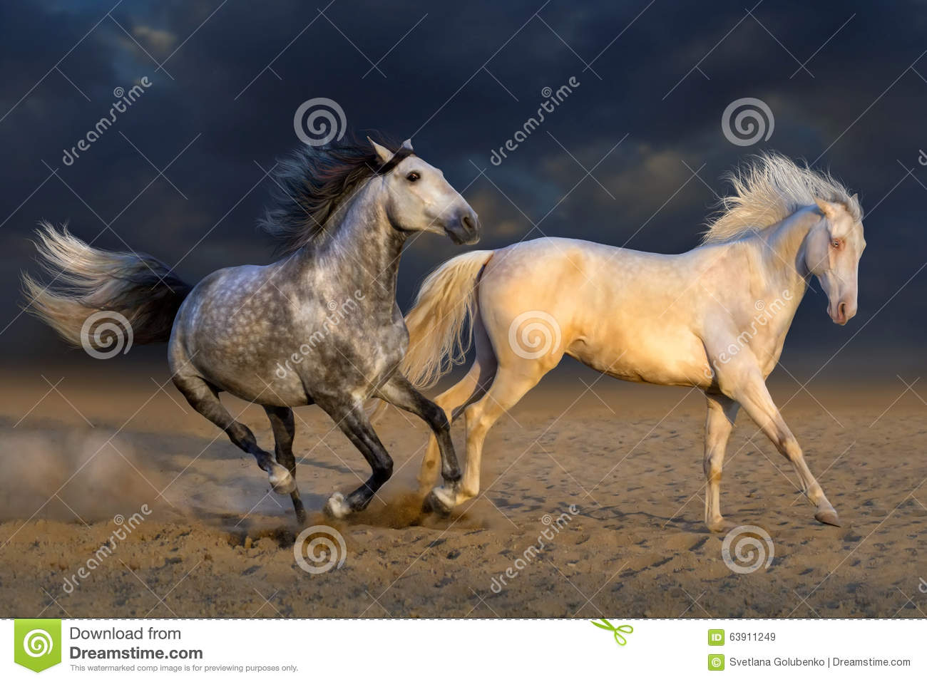 Two horse play