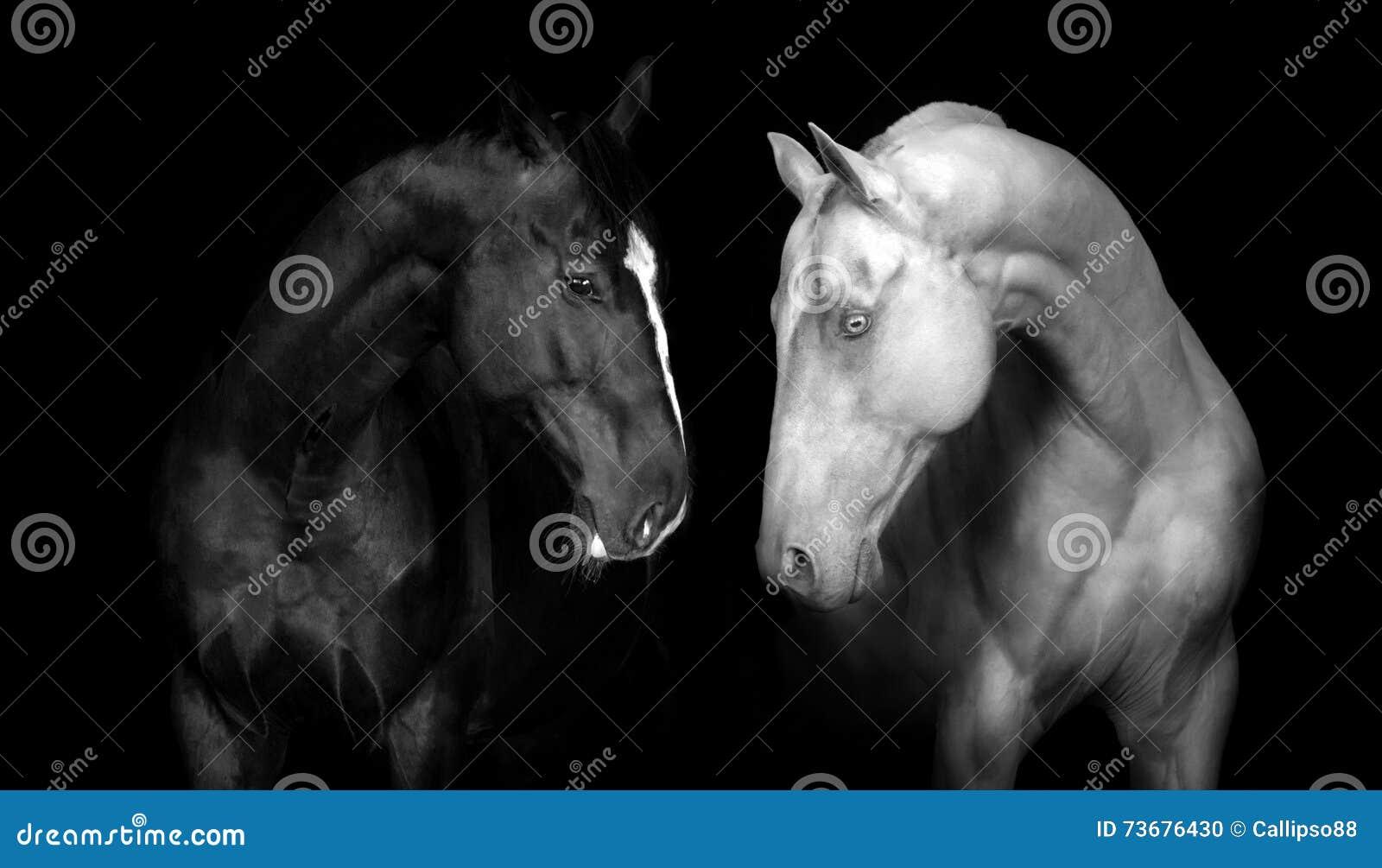 Two horse portrait
