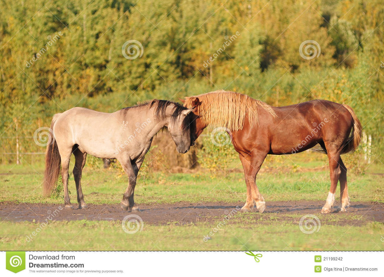 Two horses communicating