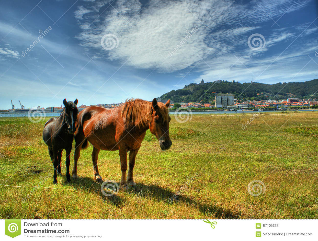 Two horses grazing in Viana do Castelo