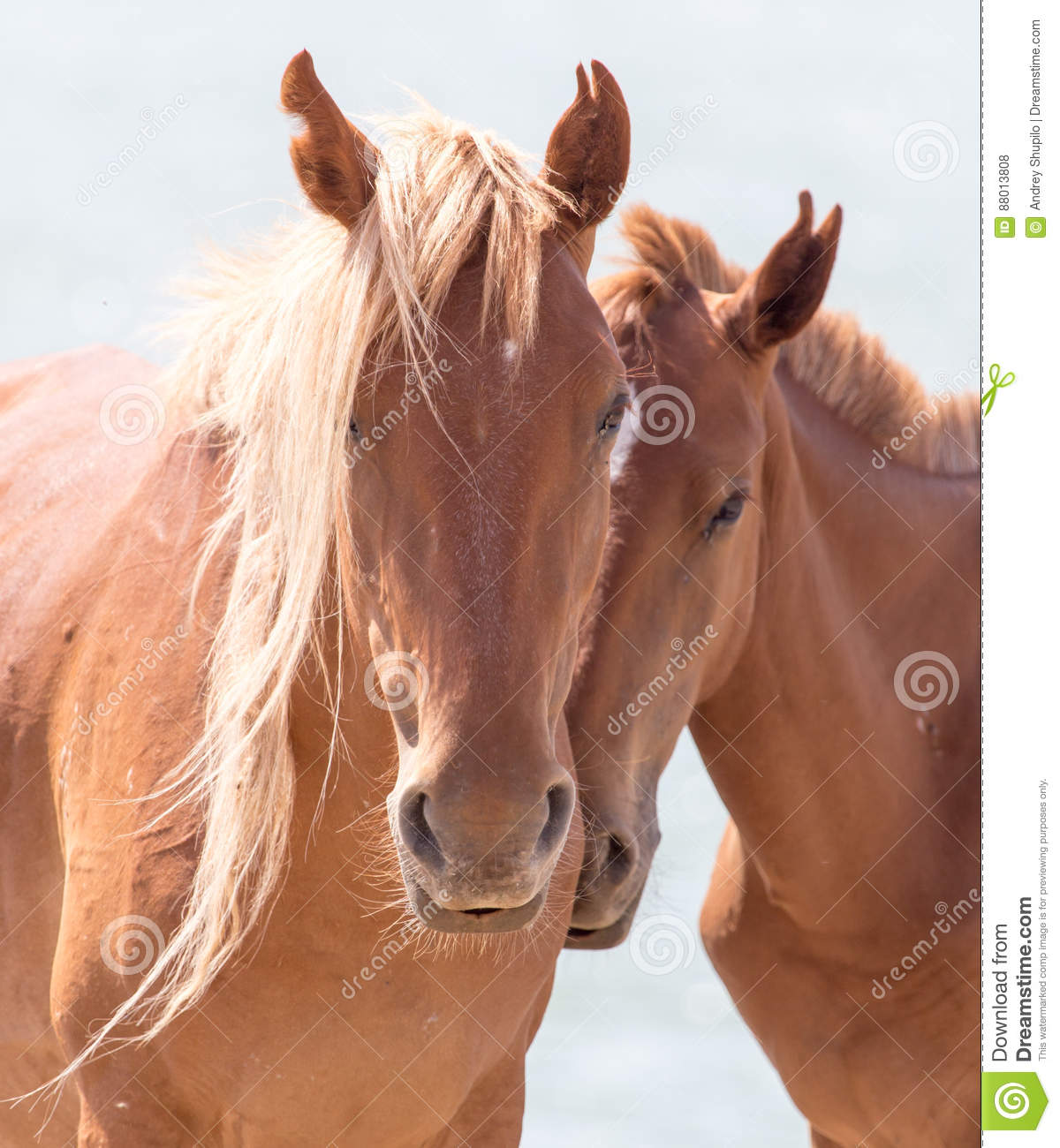 Two horses on the nature
