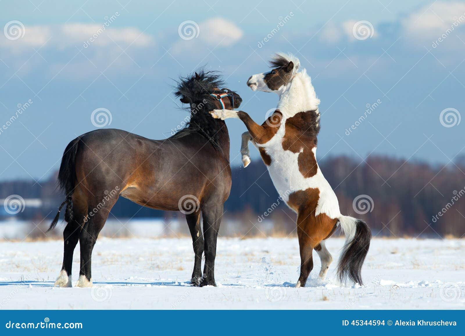 Два коня дизайн