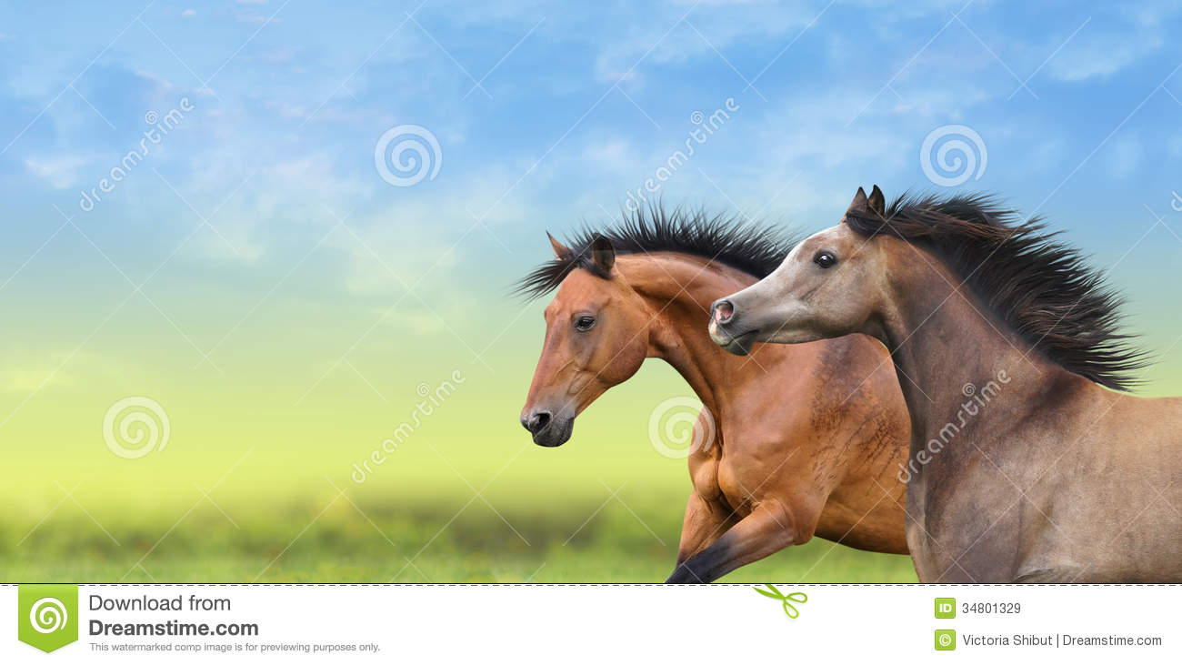 Two Horses Running Through The Green Field Stock Image Image Of