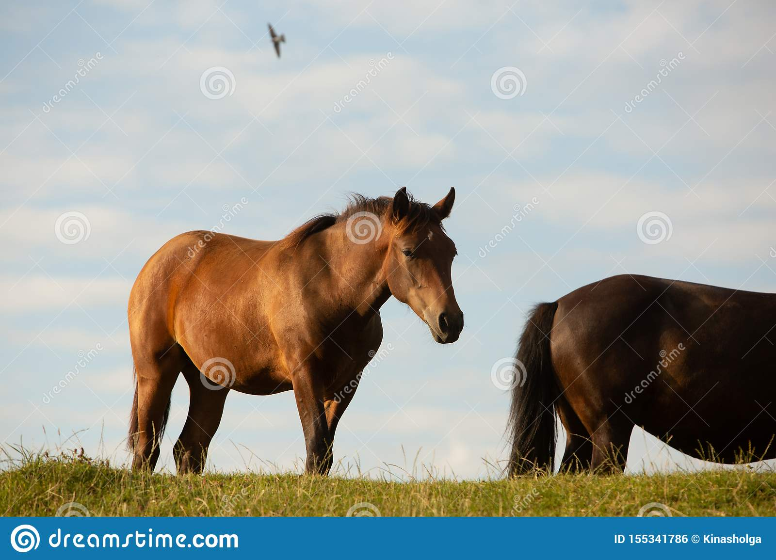 Two horses in a summer pasture, in the countryside