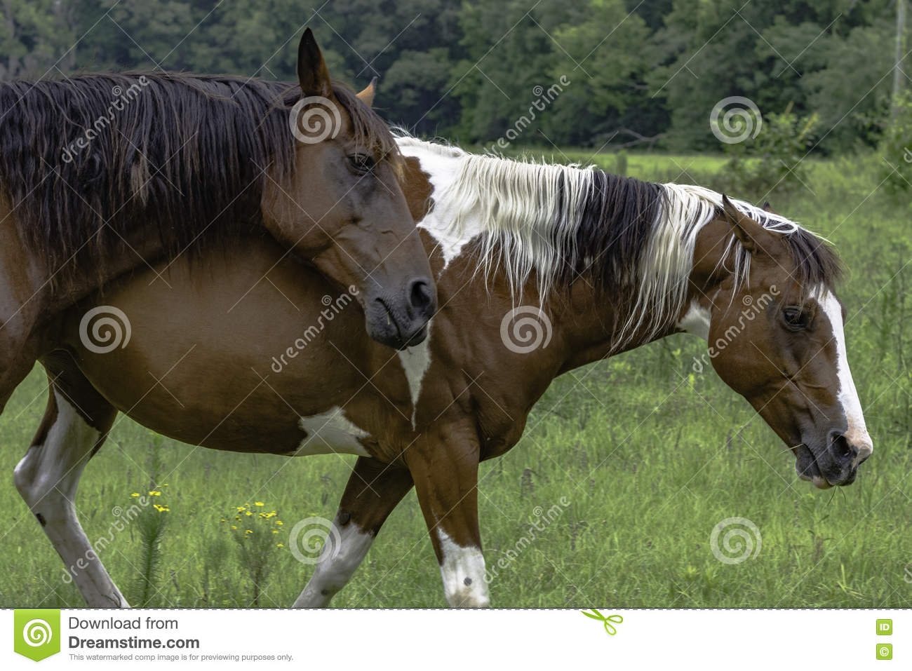 Two horses walking in a pasture