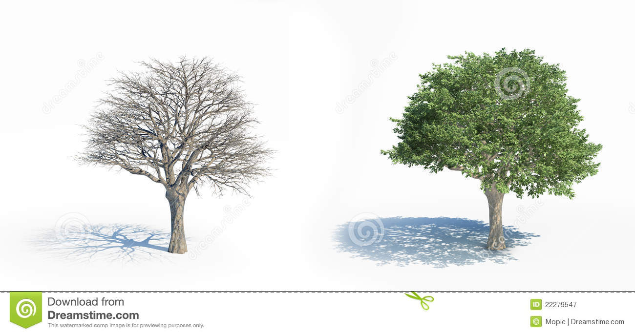 Two isolated trees