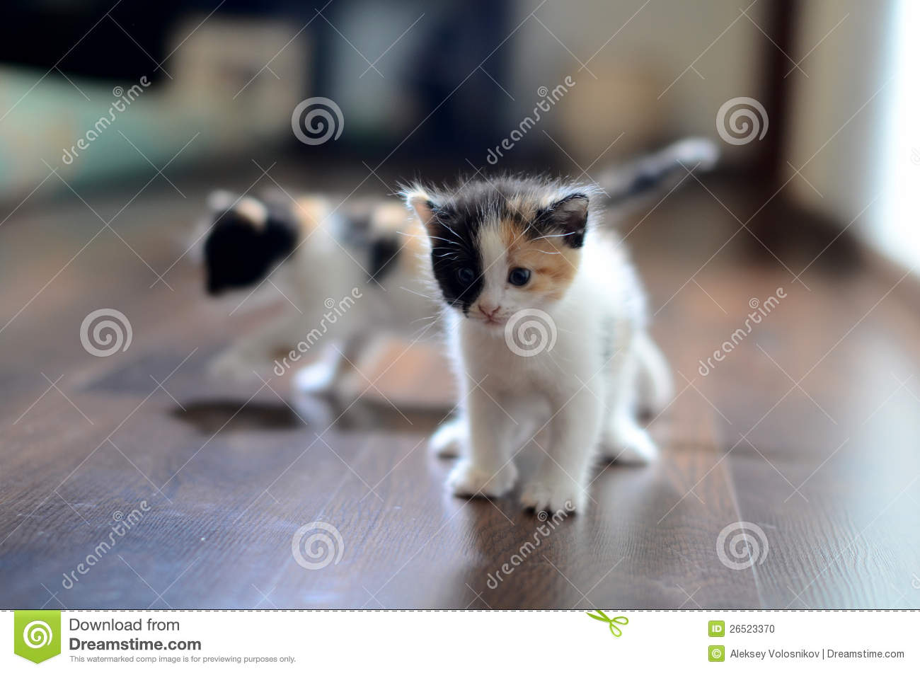 Download Two kittens stock photo. Image of juvenile, furry, pets - 26523370