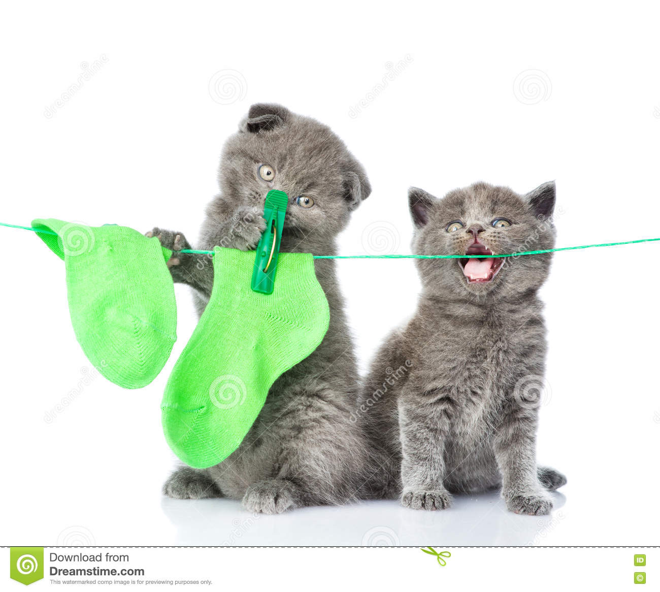Two kittens hanging socks on the rope for drying. isolated on white