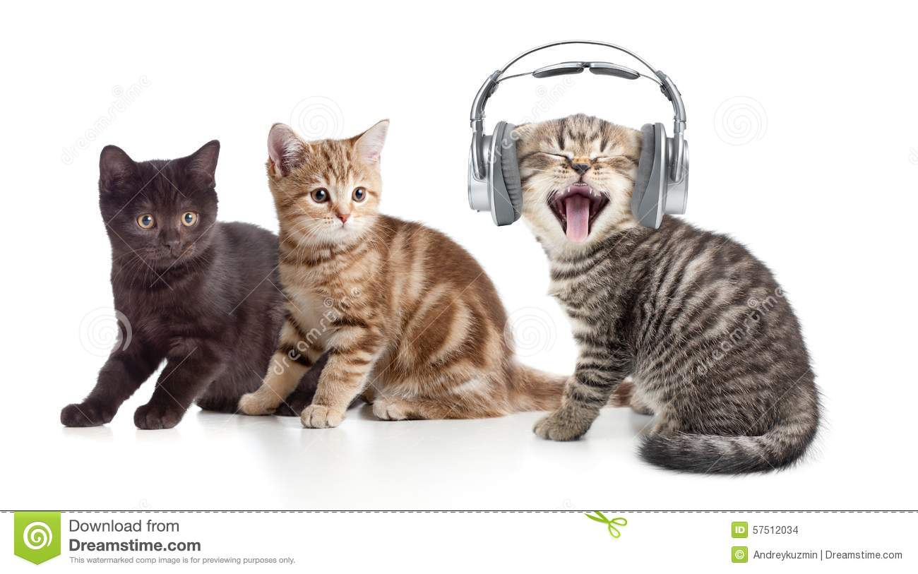 Two Kittens And Little Cat Listening To Music In Stock ...