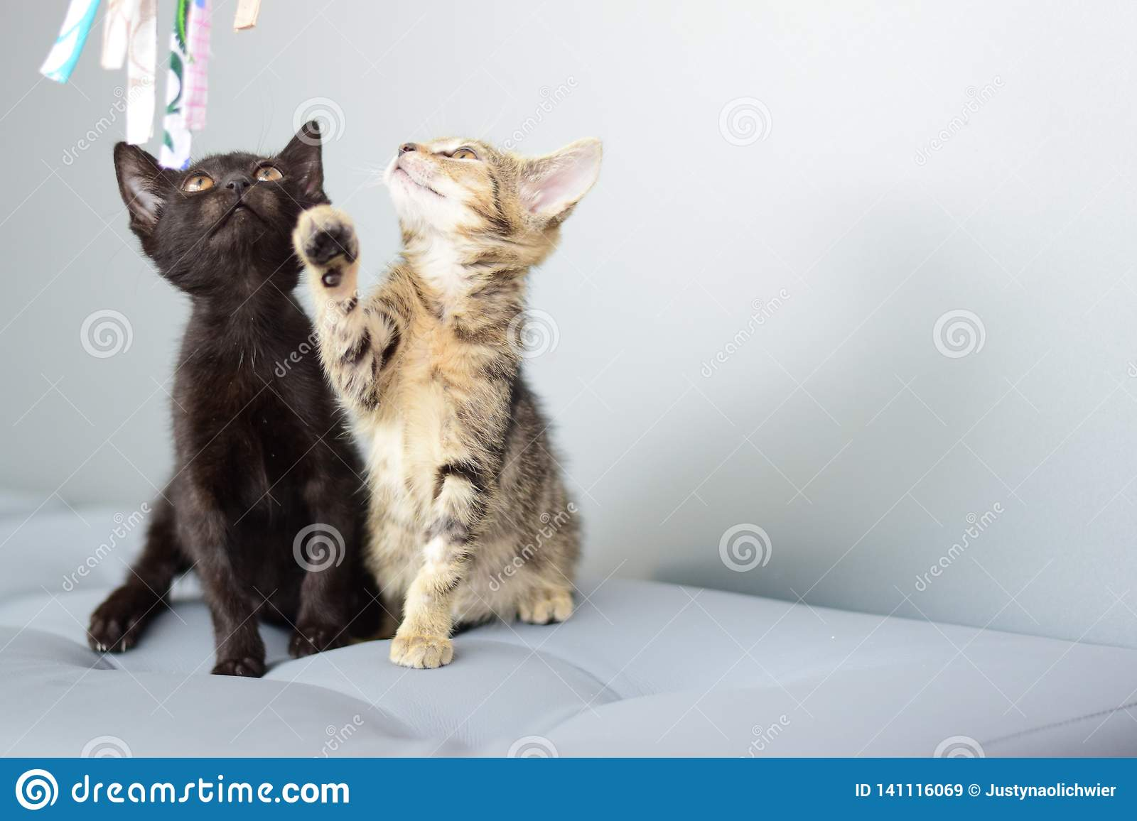 Two kittens playing on the sofa with free right