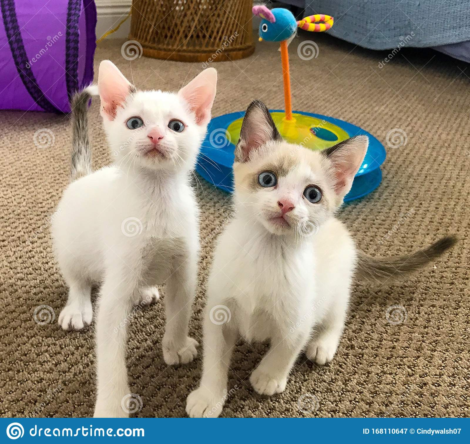 Two Kitty Cats Stock Image Image Of Little Camera 168110647