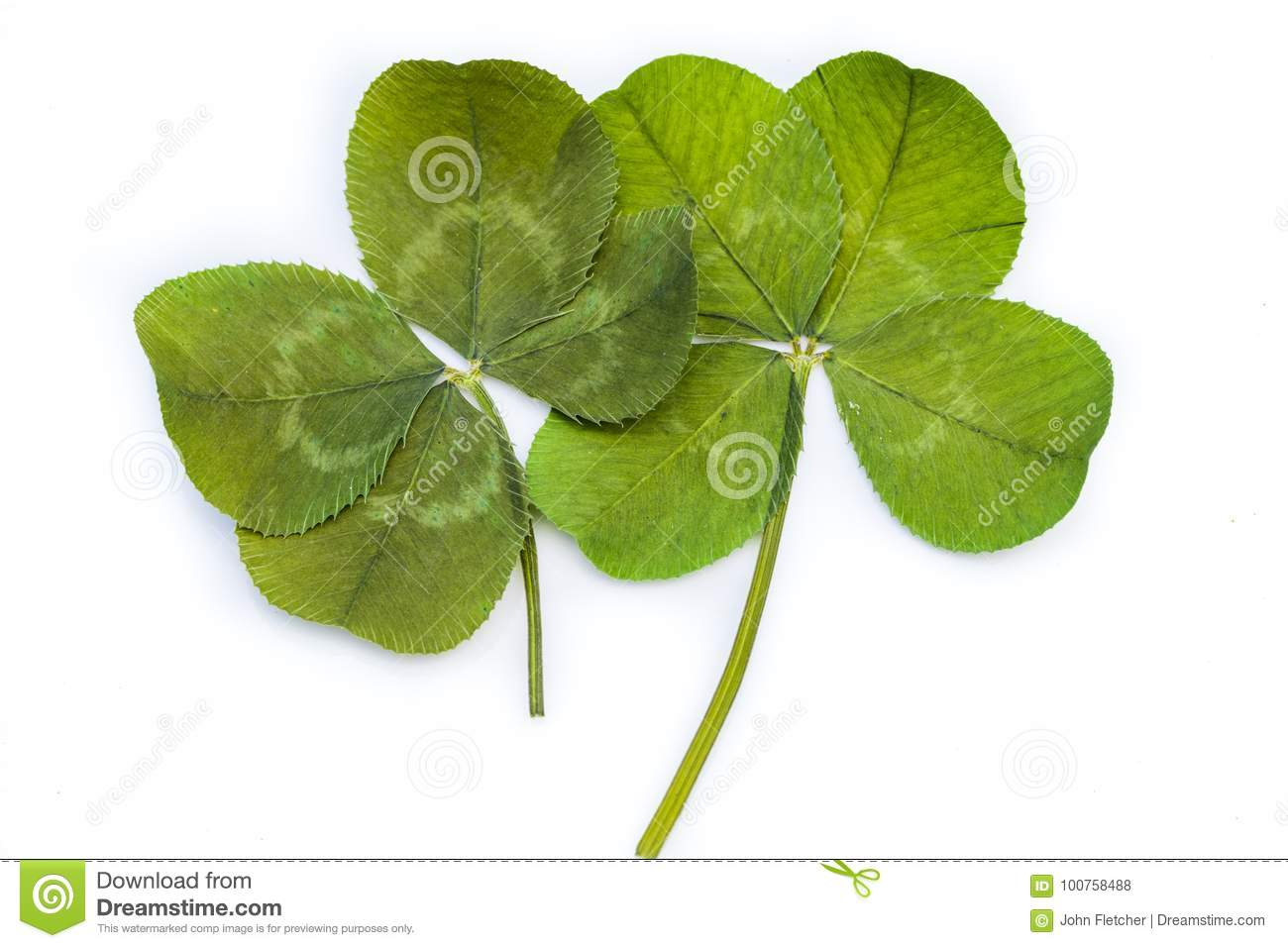 Two 4-Leaf Clovers