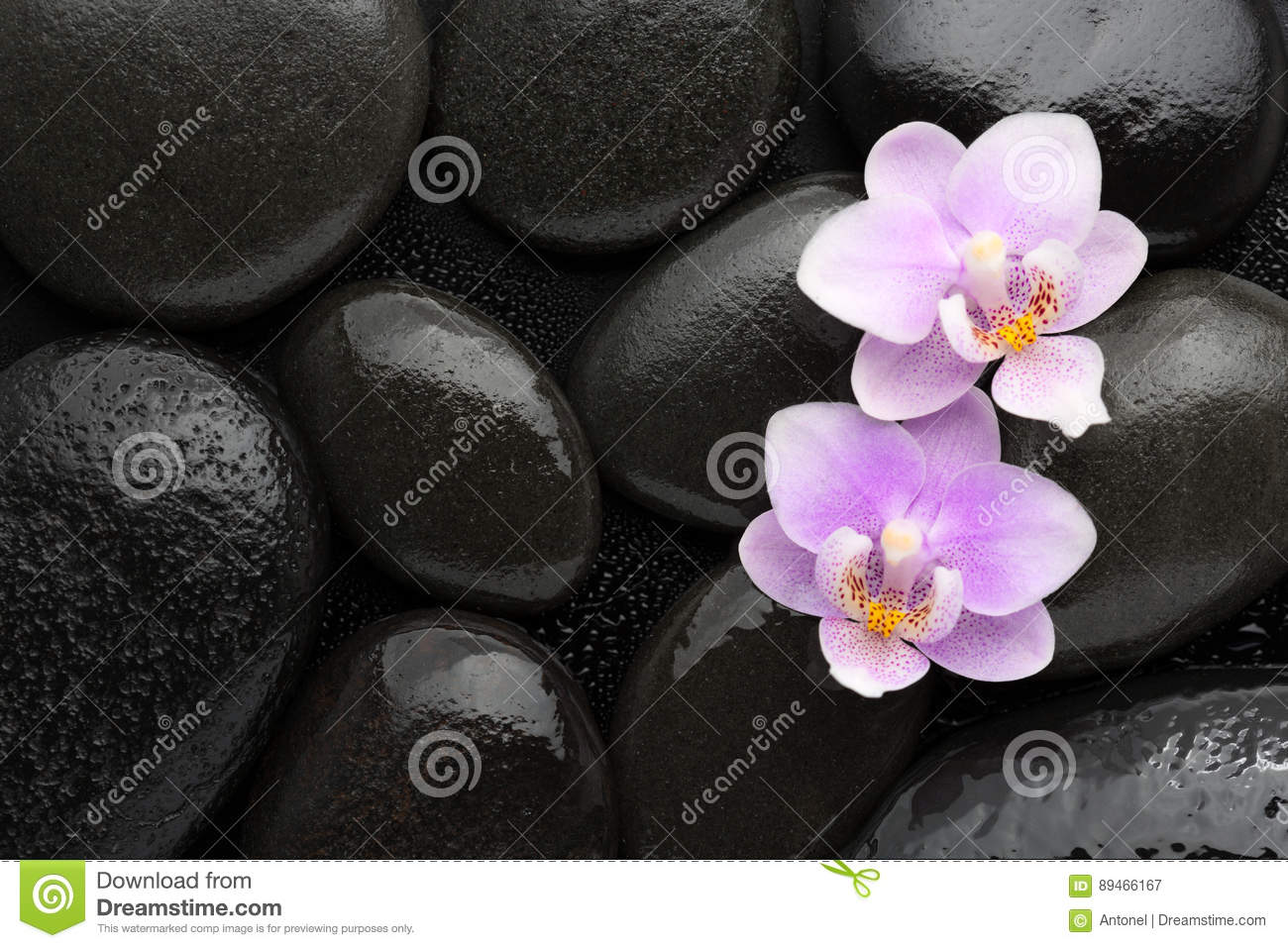 Two light pink orchids lying on wet black stones. Viewed from above. Spa concept